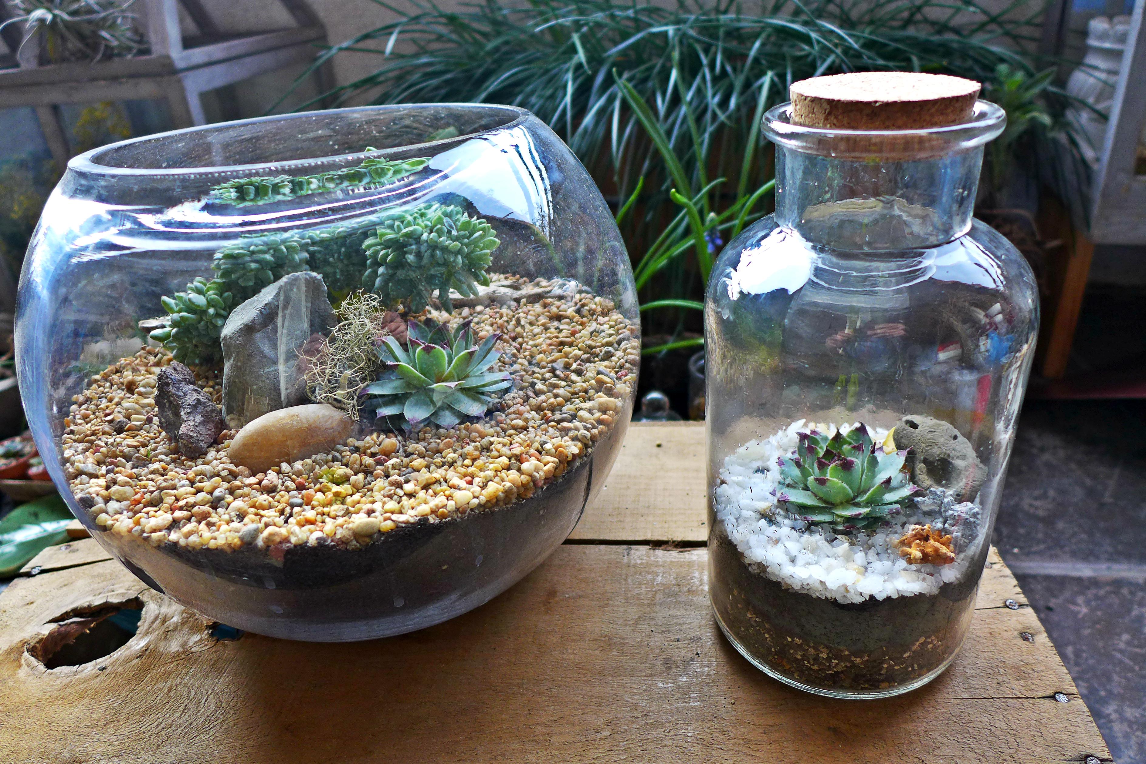 Terrarium En Casa Puro Paisaje - Terrario-para-plantas
